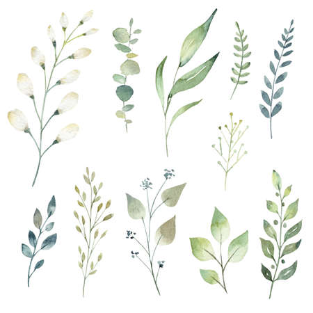 Watercolor greenery leaves and branches collection. Hand drawn illustration isolated on white background.