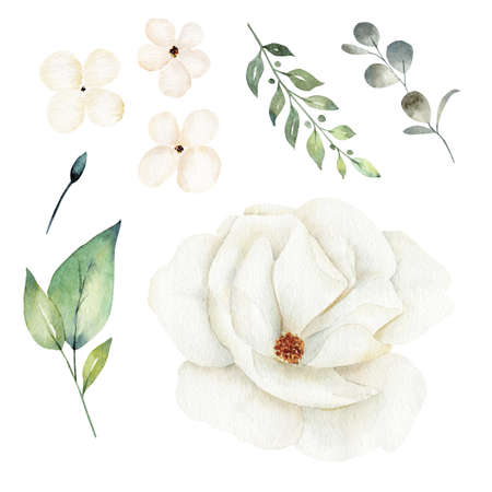 White flower and greenery leaves clipart set. Watercolor hand drawn illustration.