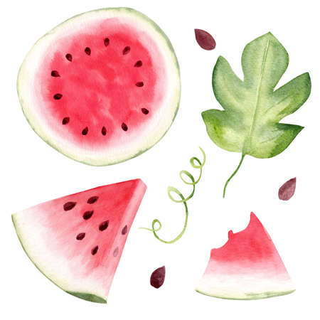 Watermelon fruit watercolor clipart. Hand drawn summer food illustration. Design for greeting cards, summer and pool party, kitchen decor. 免版税图像