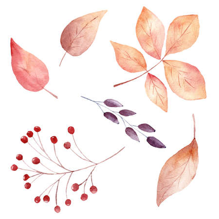 Watercolor fall leaves and berries isolated on white background. Autumn clipart for invitations, graphics, greeting cards, diy scrapbooking.