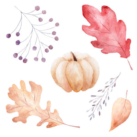 Hand drawn watercolor fall leaves, pumpkin and berries isolated on white background. Autumn clipart. Illustration for invitations, greeting cards, diy scrapbooking.
