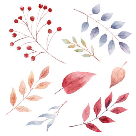 Hand painted watercolor fall leaves and berries. Autumn clipart. Graphics for thanksgiving card, invitations, scrapbooking, diy projects.