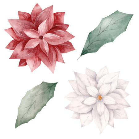 Watercolor red and white Christmas flowers and greenery leaves. Hand painted illustration. Clipart for invitations, greeting cards, scrapbooking, diy projects. 免版税图像
