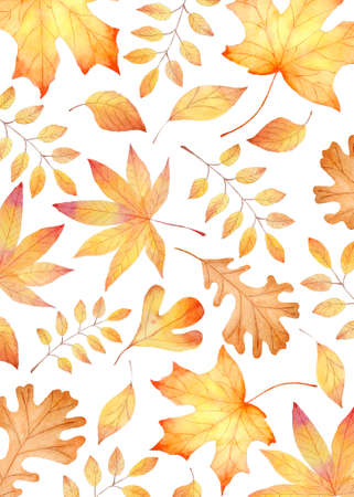 Fall leaves watercolor clipart. Orange leaf hand painted illustration. Autumn hand painted illustration.