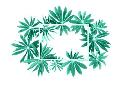 Exotic biscay green lupin leaves with wooden frame or border with copy space isolated on white background. Green, eco nature spring summer concept