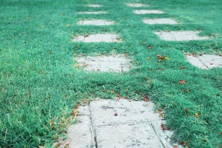 Tiled path on green grass lawn in the garden with orange pink fallen flower petals on the ground. Natural background Stok Fotoğraf