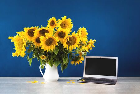 Sunflowers in white vase and a laptop on wooden desk with blue color blocks background. Vibrant flowers greeting card backdrop freelance coworking copy space