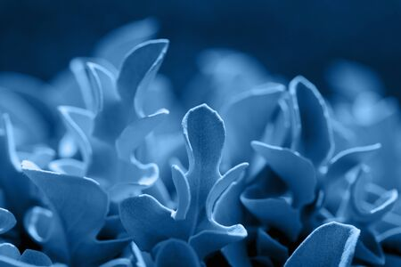 SIlver plant in shades of blue color. Side viewbackground Stok Fotoğraf