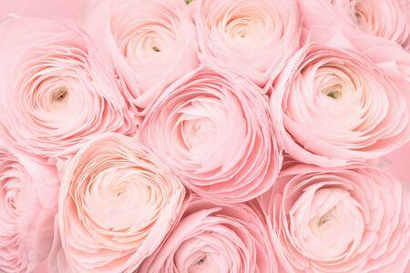 Sanfte rosa weibliche Pfingstrosen-, Rosen- oder Butterblumenblüten mit zarten geschichteten Blütenblättern aus nächster Nähe. Natürlich strukturierter monochromer Frühlings- oder Sommerhintergrund für Mütter, Valentinstag oder Frauentag