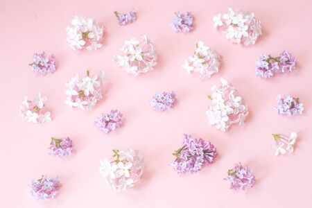 Assorted tender monocrome lilac spring flowers clusters on pink background with selective focus. Birthday celebration or wedding invitation card