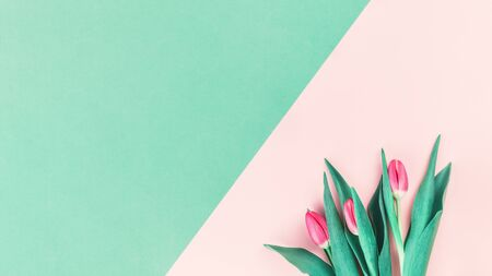 Bouquet of fresh pink tulips on pink and mint neo green background. Flat lay with copy space, Birthday gift. Valentines 8 March Womens or Mothers Day celebration greeting card or minimal banner