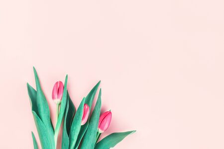 Bouquet of fresh pink tulips on candy pink background. Flat lay with copy space, Birthday gift. Valentines 8 March Womens or Mothers Day celebration greeting card or minimal floral banner
