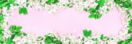Spring summer festive blooming with white flowers fruit tree branches and yellow frame border on pink. Long banner fresh floral flat lay with copy space