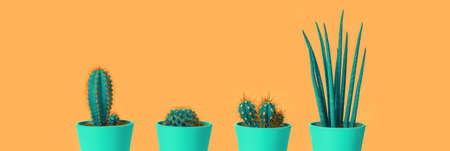 Four different cacti in green pots on pastel terracotta orange background. Environment friendly summer or spring time minimal design concept banner with copy space