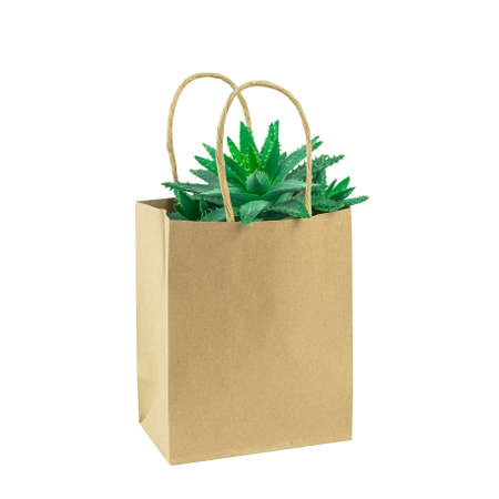 Cactus or succulent in an eco paper bag isolated on white. Environment friendly mock up. Florist sale or shopping. Greenery
