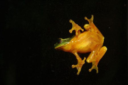treefrog: tree frog on the outside of a window at night