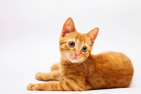 a handsome, cute, red, a small kitten lies on a white backdrop of c large eyes