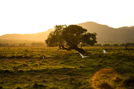 dream land: White birds are flying towards the sun in the field of Goa, India Stock Photo