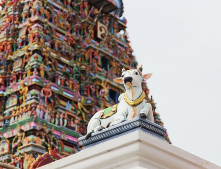india cow: Cow and other detais of indian Kapaleeswarar temple , Chennai, India