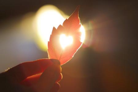 手でカットの心と秋の赤い葉