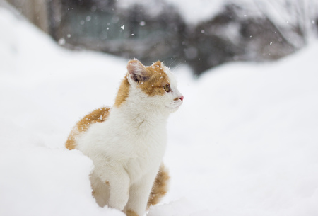 Cute little cat sitting in the snow Stock Photo