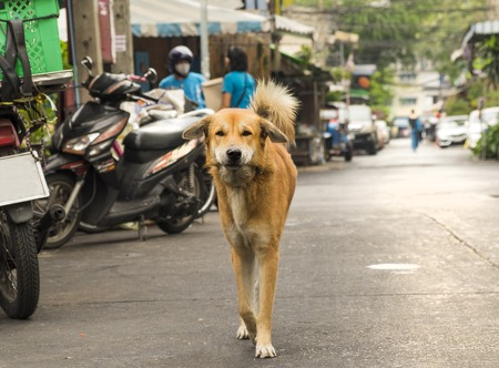 Funny cute dog in the street of Bangkok city, Thailand