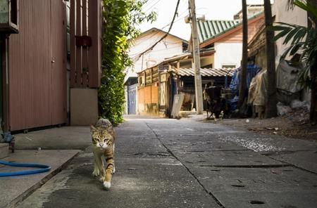 Funny cute cat in the street of Bangkok city, Thailand Stock Photo
