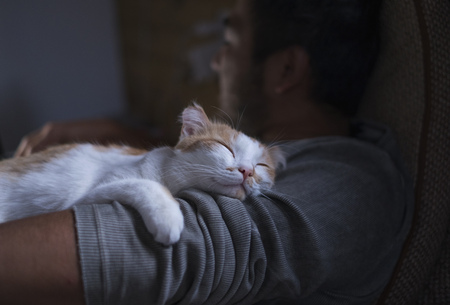 Cute smiling happy cat lying on the mans shoulder