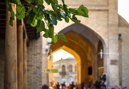 Dome market in old town of Bukhara, leaves are in the pictures foreground