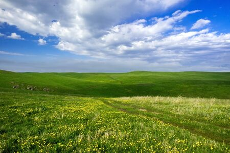 Beautiful summer landscape, yellow flower field and country road over hills
