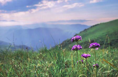 Beautiful summer landscape, purple flowers in the mountains and sunrays in the sky, plateau Ushkonyr, Almaty, Kazakhstan.