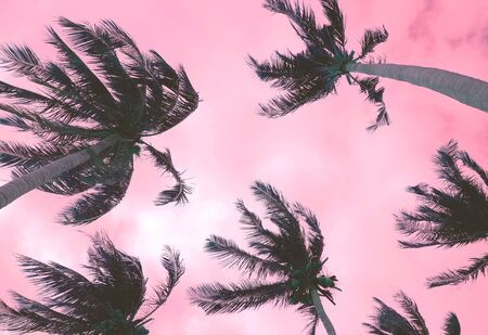Tropical palm trees and purple sky in windy weather
