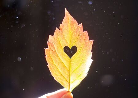 Autumn red leaf with cut heart in a hand, dust particles in light