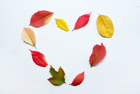 Heart made of colorful autumn leaves on the white painted wooden background. Top view, flat lay.