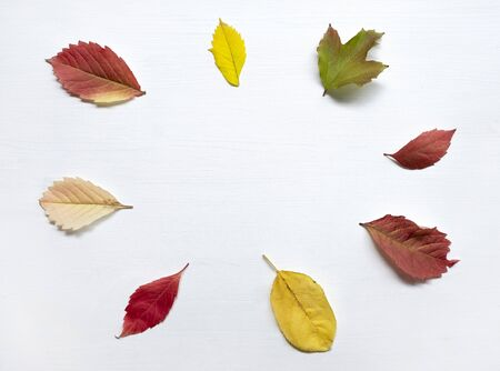 Colorful autumn leaves on the white painted wooden background. Top view, flat lay. Stock fotó