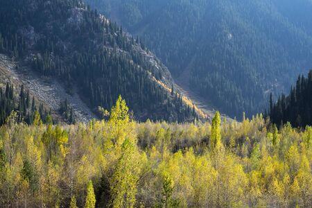 Beautiful landscape, autumn yellow forest and mountains. Kazakhstan.
