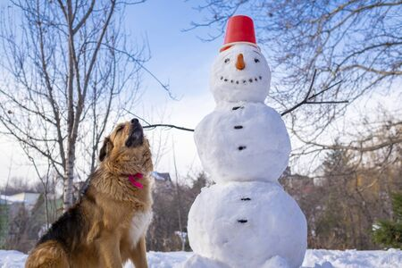 Snowman and furry dog under a blue sky on a winter day.