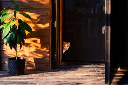 cute cat is going to walk outside front door of house