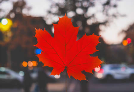 Red maple leaf on background of night city. Autumn concept.