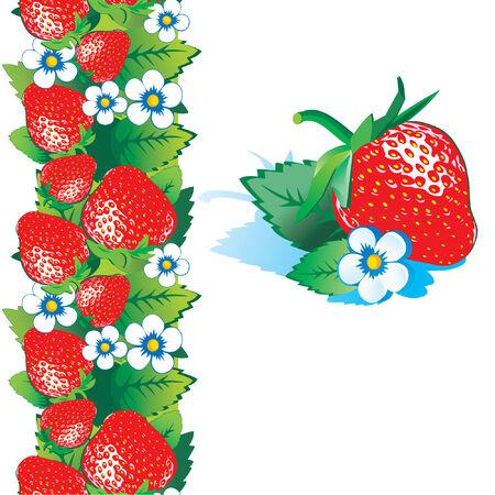 Fresh strawberry Vetores