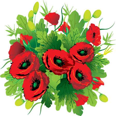 florist: Poppies