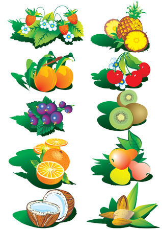 Various nice fruits and nuts Illustration