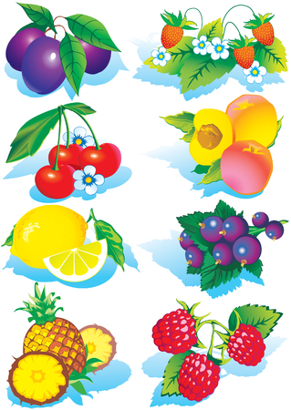 Various juicy fruits on a white background.  Healthy food. Vector art-illustration. Vector