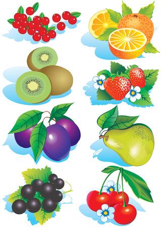 flower market: Various juicy fruits on a white background.  Healthy food. Vector art-illustration. Illustration