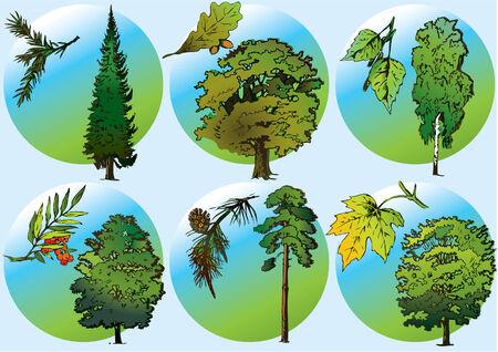 Trees and foliage of vaus plants. Vector art-illustration. Stock Vector - 5374109
