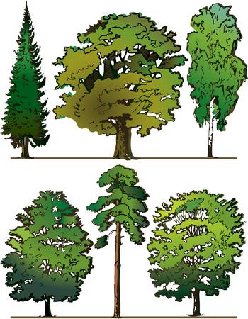 Satz von verschiedene Bäume auf einem weißen Hintergrund. Abbildung-Vektor Kunst.