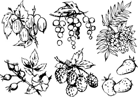 raspberry: A set of different berries on a white background. Healthy food. Vector art-illustration. Illustration