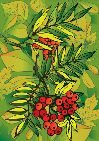 verdant: Rowan branch with berries on a background of leaves. Vector art-illustration.