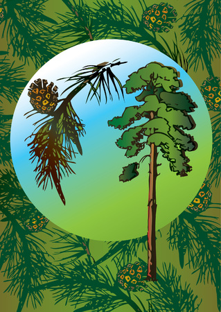 Fir tree and its branch in the oval. Vector art-illustration. Vector