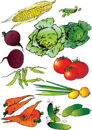 cucumber salad: Colecci�n de diferentes verduras sobre un fondo blanco. Vector art-ilustraci�n. Vectores